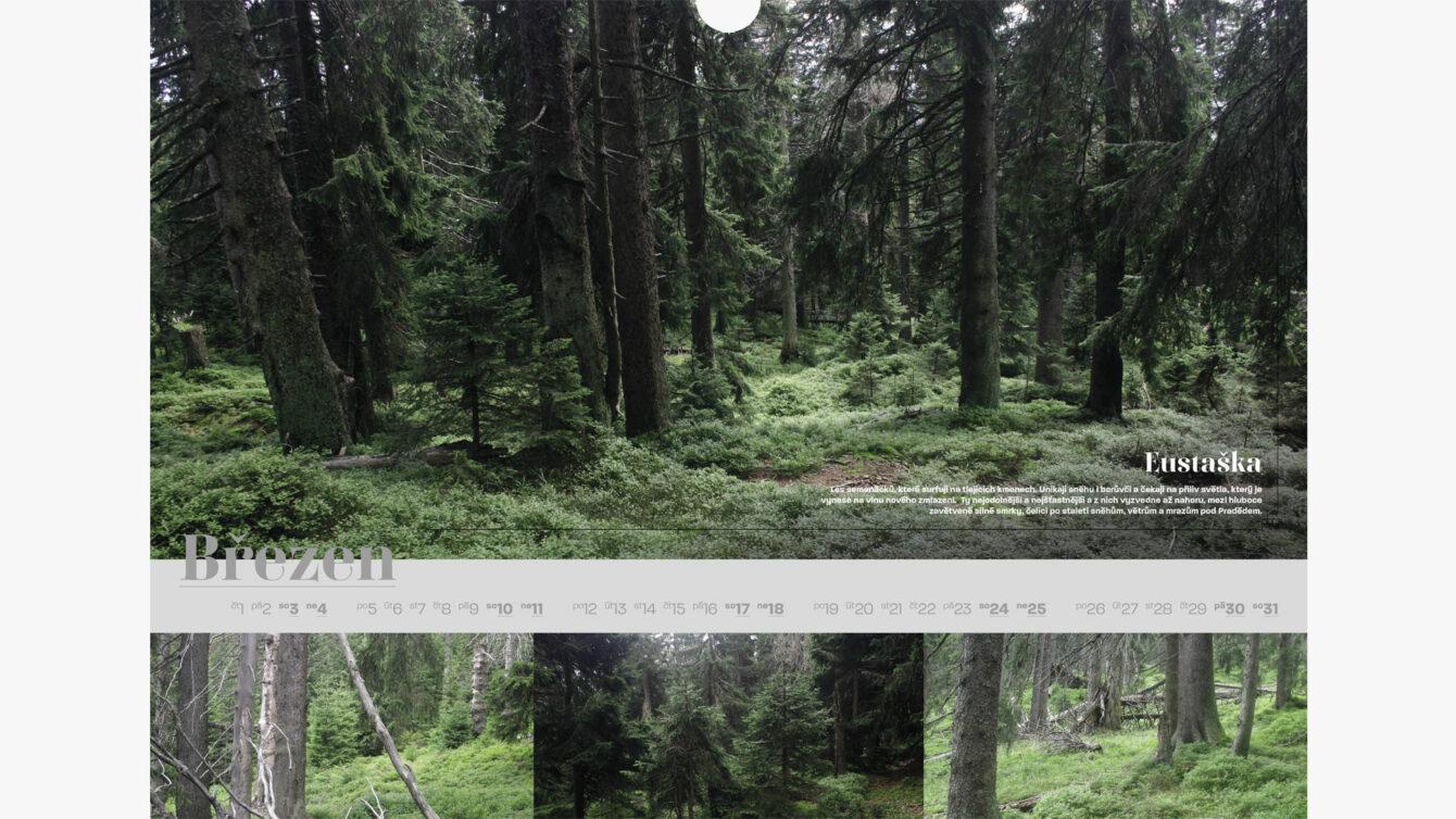 Kalendář pralesů ČR, webdesign, Logo and Print, Brno