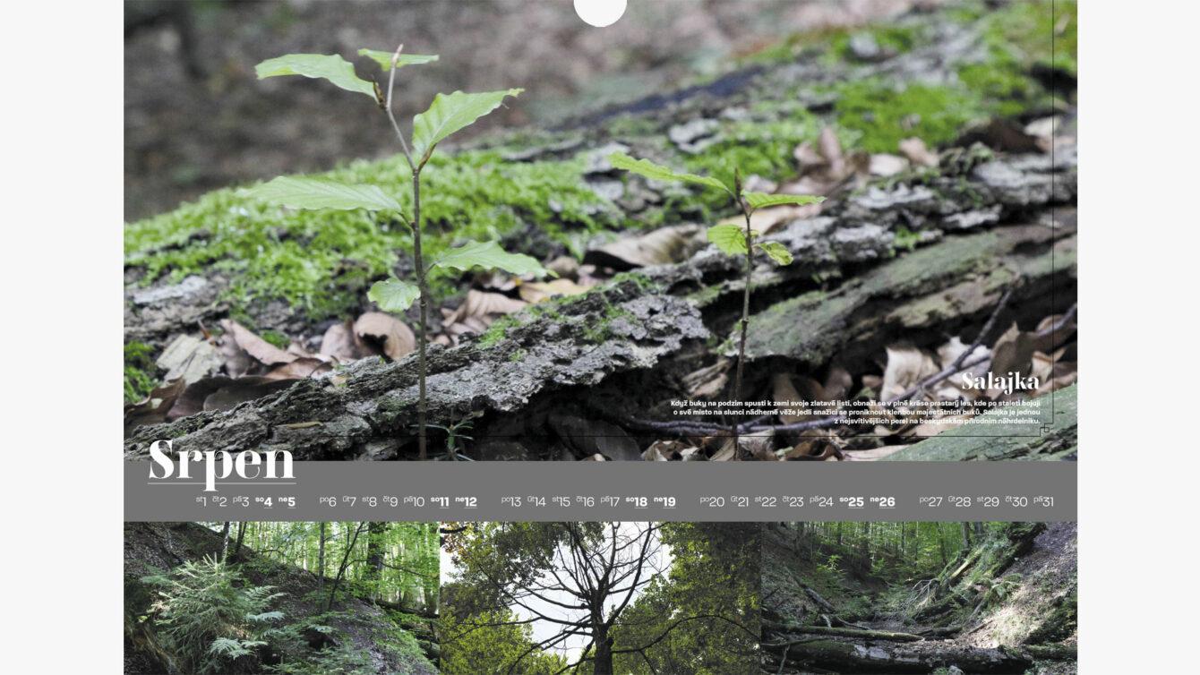 Kalendář pralesů ČR, Print, webdesign, Brno