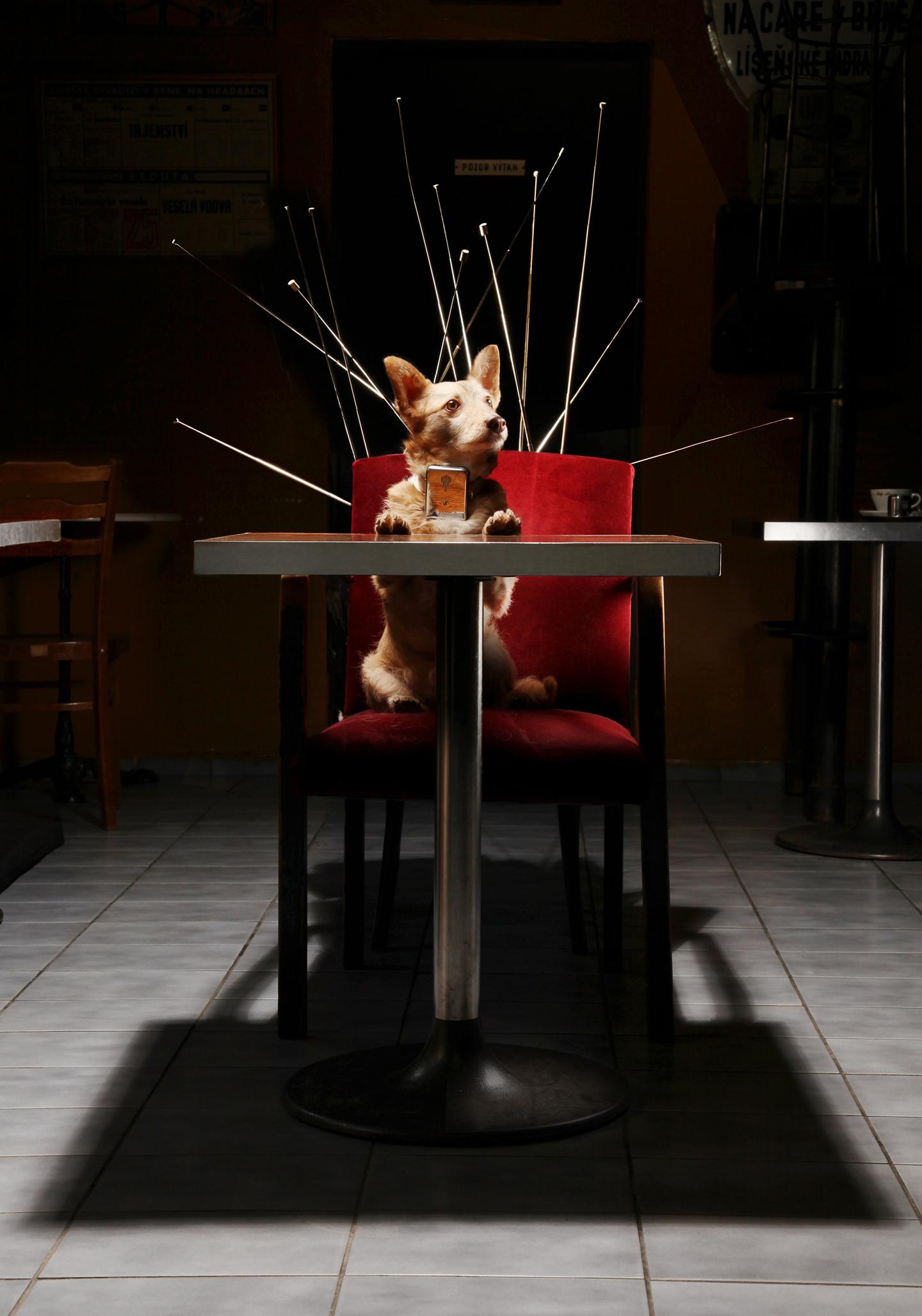 Café Transistor - realizace, Fotografie