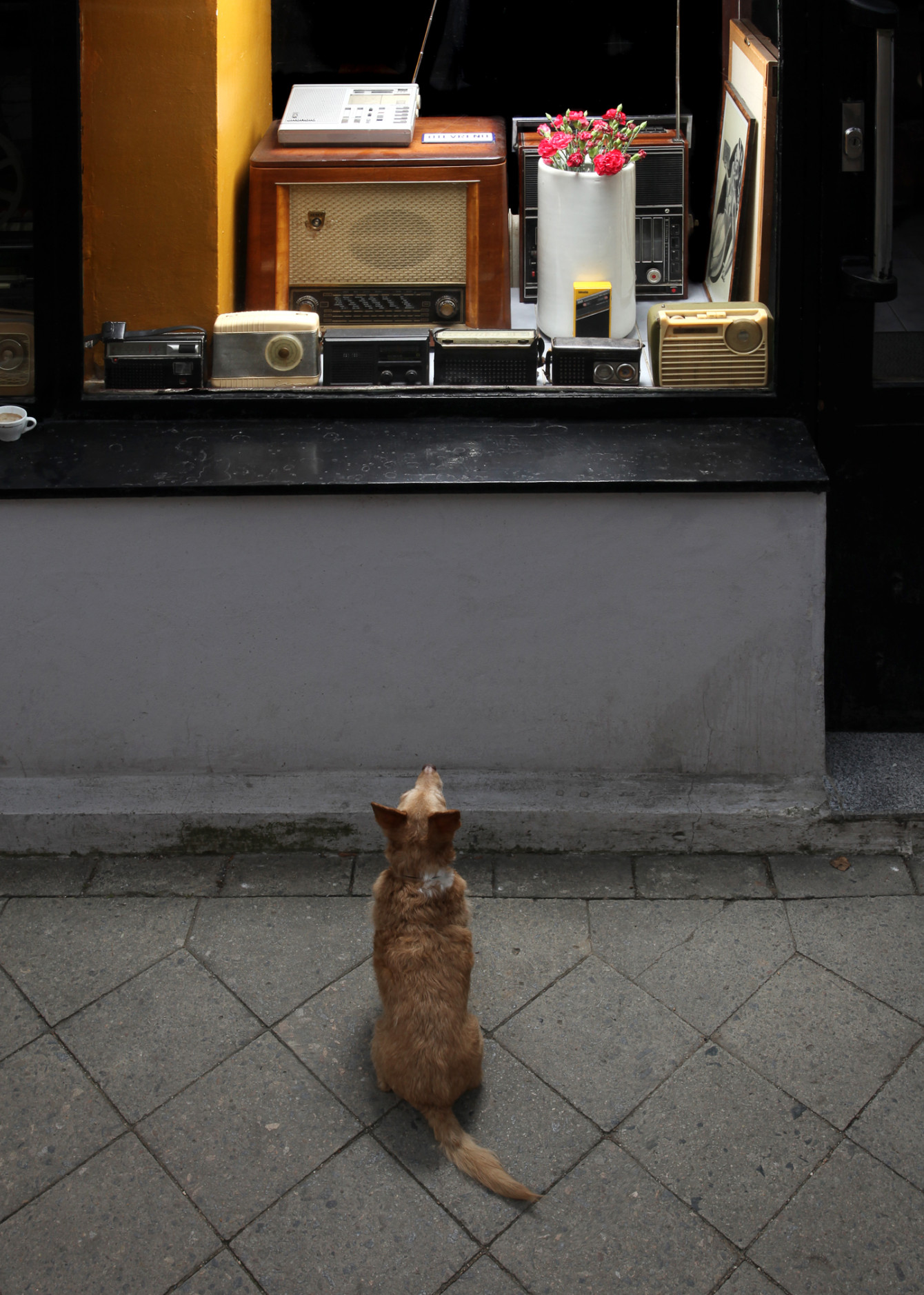 Café Transistor, fotografie, design, webdesign studio, Brno